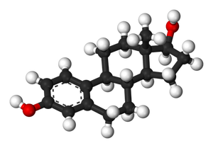800px-Oestradiol-3D-balls-wikimedia-commons